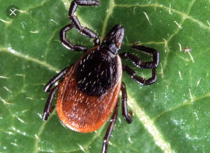 Integrative Approaches to Lyme Disease by Dr. Zach Mazone, DO